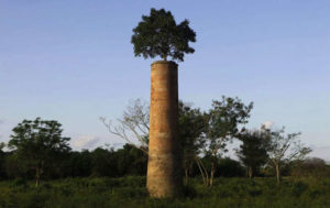 arbre-cheminée