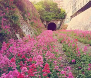 fleurs-chemin-de-fer